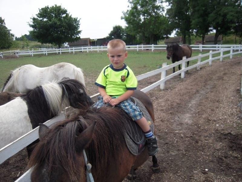 Noah til hest